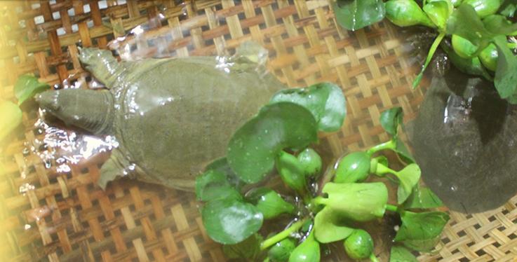 Ba Ba Giống Minh Lanh